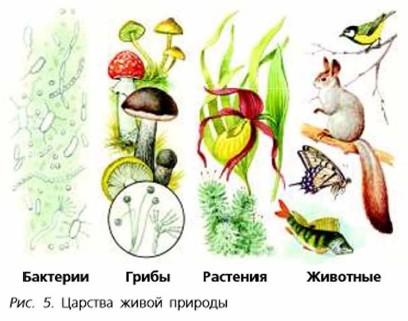 Доклад разнообразие живой природы 4499